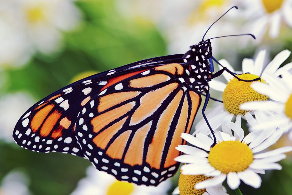 What Can Butterflies Teach Us About Professional Development?